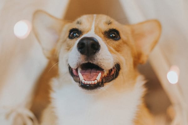 happy dog boarding