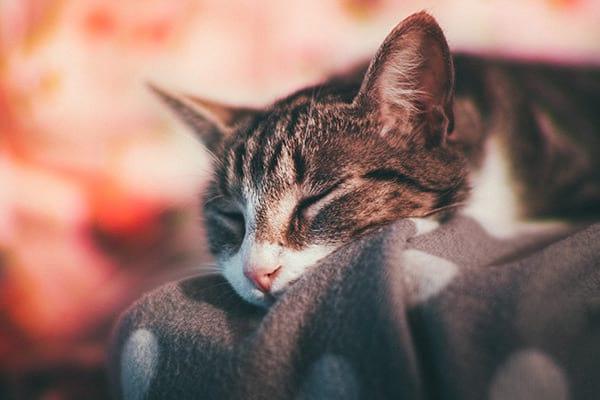 sleepy cat boarding