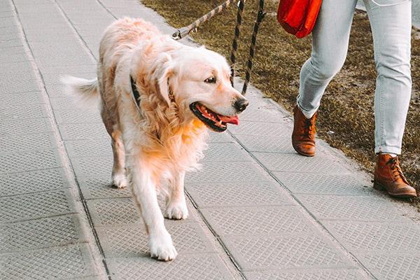 dog boarding activities
