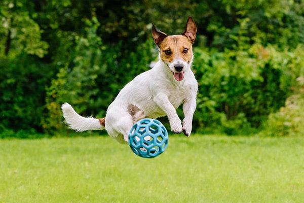 happy dog playing